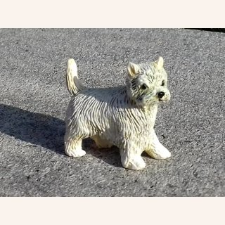 Weißer West Highland Terrier